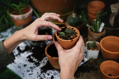 Cheap & Organic: Using Household Items and Waste for Better Gardening