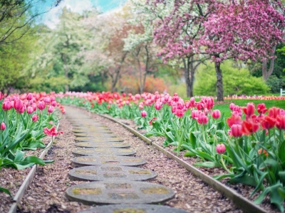 Get Ready for Spring with a New Garden: How to Get Started
